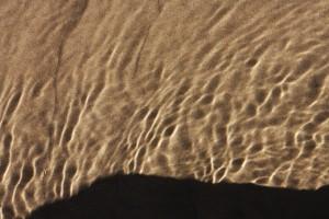 pett ripples 2