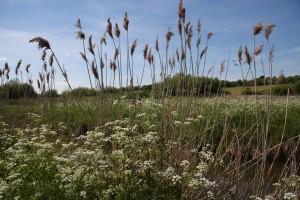 reeds may 13